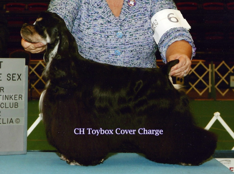 Her first breeding, to GCh. Toybox Tic-Tac-Toe has produced Toybox 'N Por Amor Cover Your Assets!
