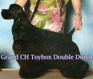 SGCH Toybox Double Dutch - His first puppies will hit the ring this Fall.