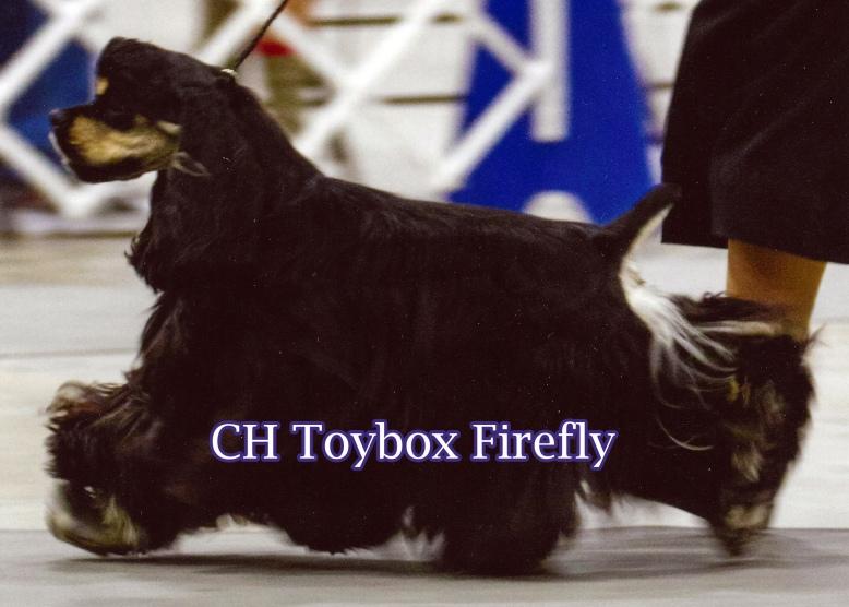 Toybox_Firefly