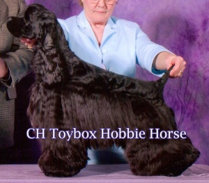 CH Toybox Hobby Horse - Sire of 5 Champions, including SGCH Toybox Little Bunny Foo Foo