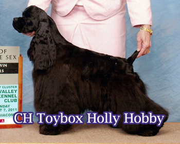 Now a top producer! Holly will be bred outside the kennel on her next season!