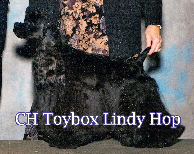 Lindy will be bred on her next season to either Dutch or Simon.