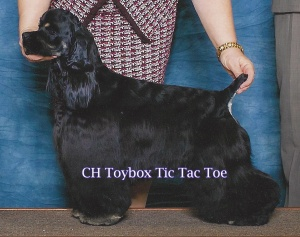 GCH Toybox Tic Tac Toe - The Sire of our current hopeful, Toybox 'N Por Amor Cover Your Assets